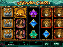 Exotic Cats Slot machine