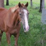 Horse Poker Rules