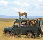 Safari Stampede Slot